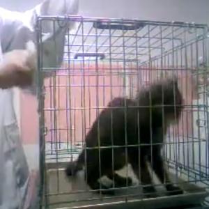 ★触れない保護した外ネコさんを洗濯ネットに入れる方法★