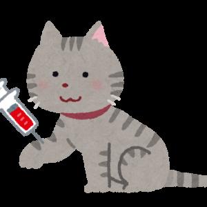 ~猫の慢性腎臓病~ ★定期検査で、前回よりBUNが上がっていたら・・・★