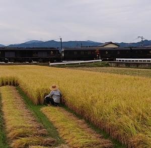 昔ながらの稲刈を❗