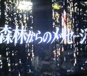 森林からのメッセージ