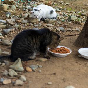 小布施の猫たち