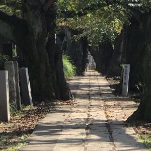 都立霊園の墓じまいを簡単、安価にしたい