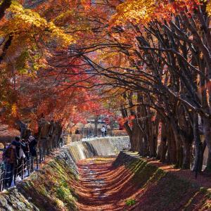 「富士河口湖紅葉まつり」へ行ってきました。