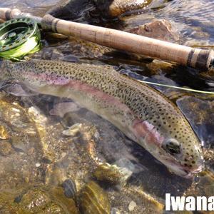 秋の魚釣り