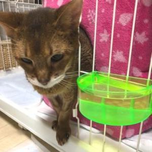 17歳の高齢猫のお水の飲み方