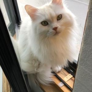 わが家の人間と猫の感染対策