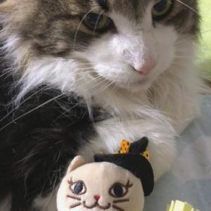 カルディのネコを猫に見せたら・・・