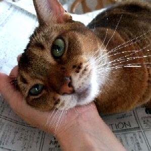 ダイソー用品で猫トイレの猫砂の飛散防止
