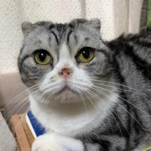 謎の行動と謎の表情をする猫