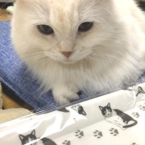 セリアで見つけた猫のトレーが・・・