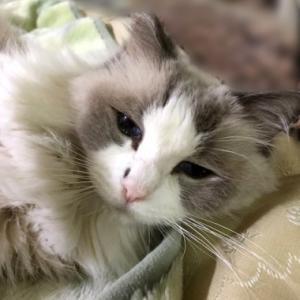 猫の老いについて考える