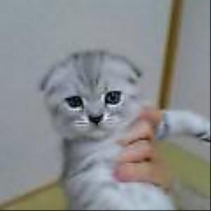猫のためにニトリのNクールを買いました~♪
