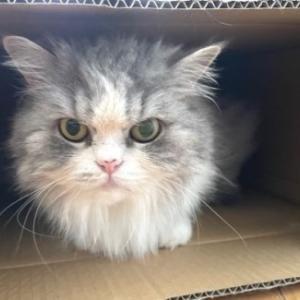 猫は飼い主をどう見ている!?