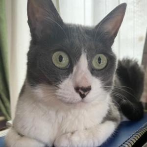 まばたきもせずに猫が熱心に見ていた番組