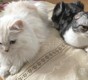カプセルトイのネコがかわいすぎて・・・。