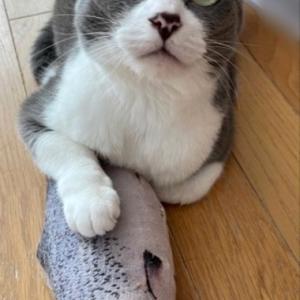 猫には内緒にしたい、ふるさと納税返礼品