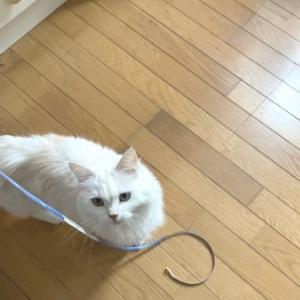 猫の手を借りて床のリフォームをしました~♪