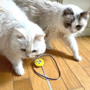 猫がシンデレラフィットしていた場所