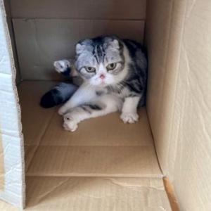猫と一緒に断捨離について考える