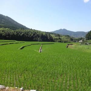 漱石も眺めた棚田の風景
