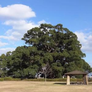 謡曲「檜垣」のナゾ