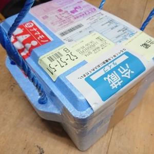 昨日届いた嬉しい贈り物のもう一つは!ずっとボランティアで行かせて頂いていた岩手県陸前高田市広田町より!!