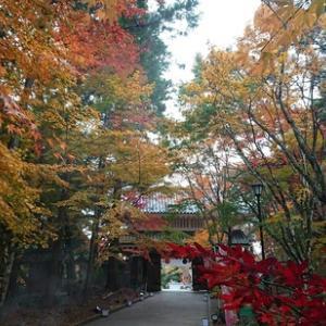 朝のパトロールの後に寄れた私の小学校時代からの学区内にある「油山寺」さんの紅葉!今年はとても綺麗!!
