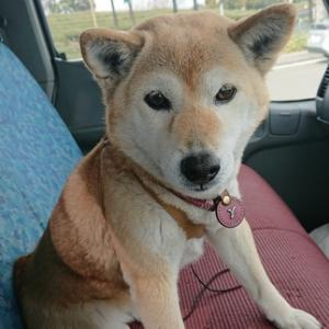 愛犬への気遣いもあって!?へとへとになって帰って来たキャリアカーでの東京への出張!何とまたまた本社では凄い偶然が!!