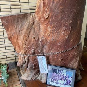 気が付けばオブジェになっていた懐かしい小学校の時のユーカリの木の思い出!当時の思い出を学校にプレゼント!