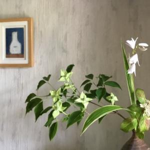 山法師と白シランと山紫陽花