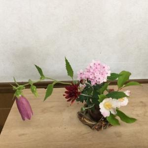 庭の花達、元気でした