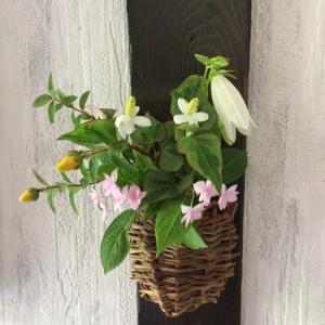 七段花と斑入りドクダミ、金糸梅、蛍袋で