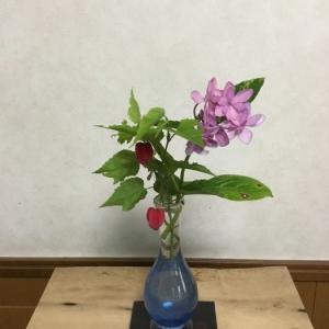 紫陽花とウキツリボクと観音竹