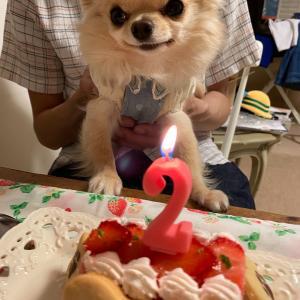 とわ君 2歳お誕生日おめでとう