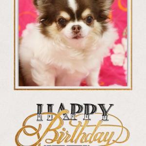 リボンことニックちゃん13歳お誕生日おめでとう