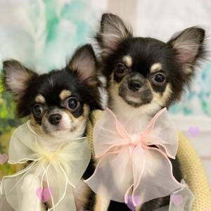 桜ちゃんと桃ちゃん姉妹 画像レター