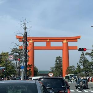 京都の出町柳の川端の桜