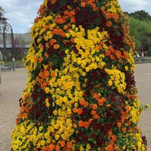 京都植物園の花です