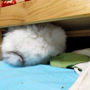 ベッドの下でふんふんふん♪