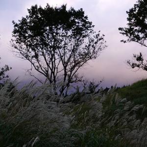 連休明けの今日 10月17日(木)曇り