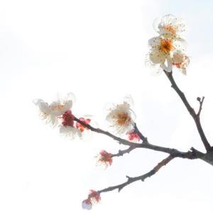 振替休日 2月24日(月)晴れ