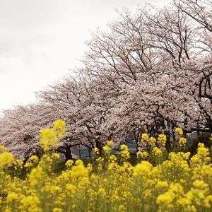また花冷え 4月5日(日)晴れ時々曇り