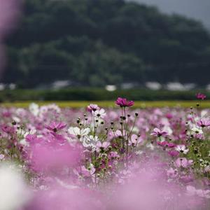 明日からは晴れそう 10月23日(金)雨のち曇り