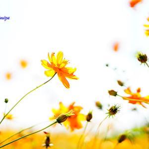 寒暖の差が・・・ 10月30日(金)晴れのち曇り