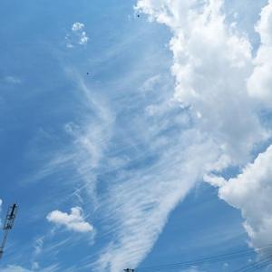 真夏日 6月17日(木)晴れ時々曇り