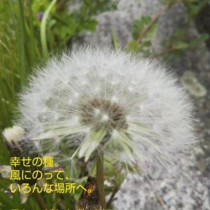 幸せの種、風にのって