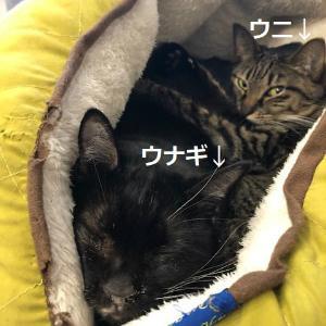 猫ぎゅうぎゅう詰め2018