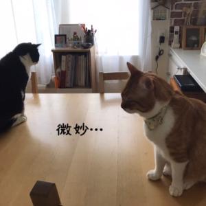 ちこうよれ とメロンオープン☆
