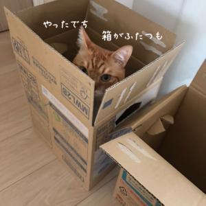 大好きな箱…よりも人が好き❤️