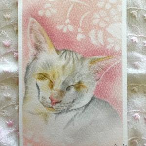 猫行脚22「こっちゃん」